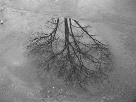 Reflection of the tree on the puddle by OlgaCherkasova