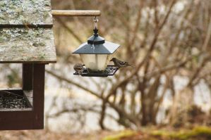 2015-03-03 Birds 07 by skydancer-stock