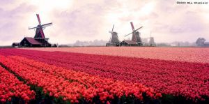 Holland by MiuwMiuw