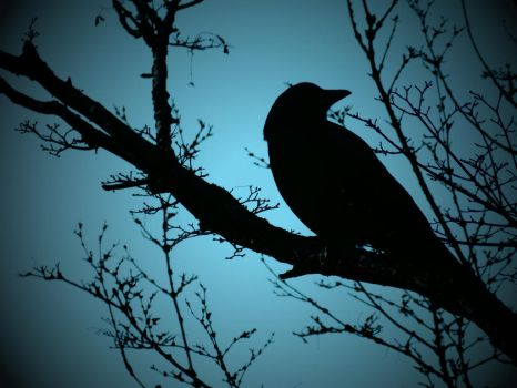 Crow Silhoutte 3 by Barghest1031