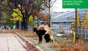 United Colors of Benetton by wykazox