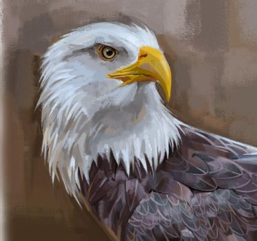 Eagle of freedom by OFFICERRICHARD