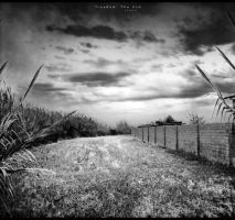 freedom. The End by proama