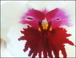 Unpronounceable type of Orchid by rhapsody-iv