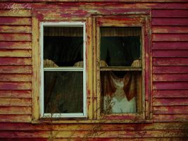 The Window Of Pain by PhotographsByBri