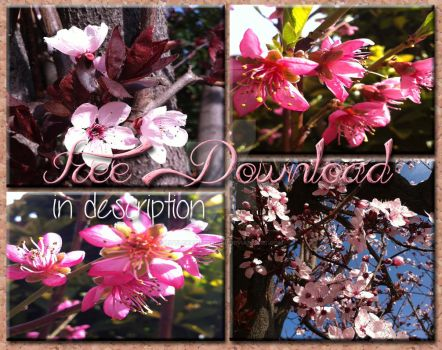 Spring series # FREE DOWNLOAD IN DESCRIPTION# by LittleHamsterGirl