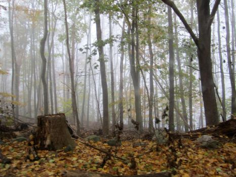Misty Woods by KristasCaptures