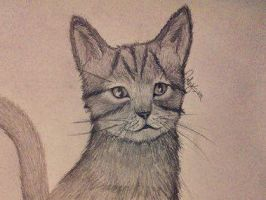 Kitten Drawing by Daystar14