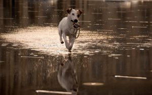 2560x1600 Dog walking on water by tezdesign