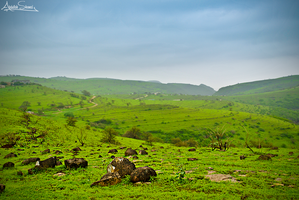 The Green Mountain of Oman by A-Shamsi