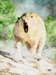 Charging Polar Bear by deskridge
