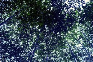 Canopy of leaves by blakelemmons