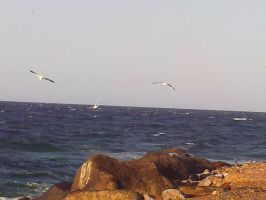 Seagulls Above The Sea And Rocks by Bloodfire09