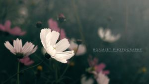 Flower by roamest