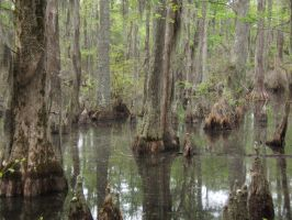 Swamp14 by Stockguy26