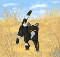 Across the plains ~Tallstar~ REDRAW by courtneyrc