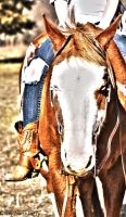 Horse In HDR by Hey-There-Lefty