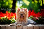 Yorkshire Terrier 3 by Katrin-Elizabeth
