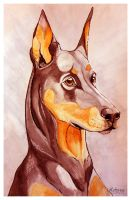Doberman by petanimalia