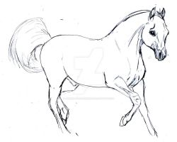 Arabisan stallion sketsh by Arabis-Wild-Horses