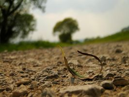 The lonely Leaf by michaelkoehler