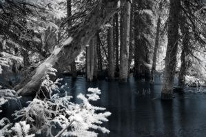 Ir Water Trees by GambllingYouth