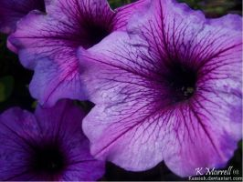 Three Purple Flowers by Kassieh