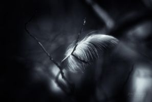 Feather Light by Nitrok