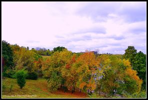 autumn day by Iulian-dA-gallery