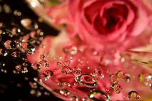 Drops of roses by angelikademidova