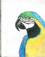 Blue and Gold Macaw by clarinetplayer