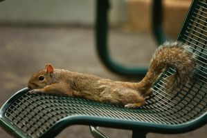 squirrel21 by redbeard31