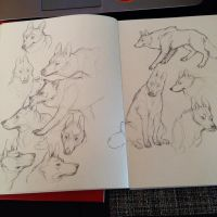 some canine practice sketches by HJeojeo