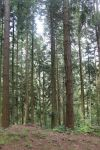 Forest in France 4 by YewrezzStock