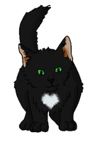 Black Cat with White Heart by DeathPhantom