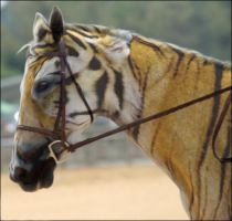 Splice Tiger Horse by PhotoAlterations