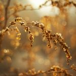 golden love by JoannaRzeznikowska