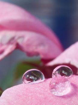 Droplets by toften