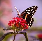 Chasing Butterflies II by MyLifeThroughTheLens
