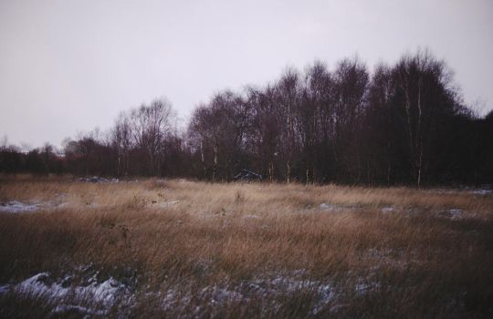 Barnagaw bog mid-winter IV by younghappy