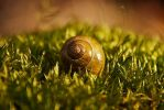Snail by Second-G