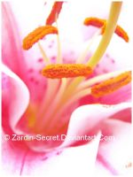 Flower 2007 by zardin-secret