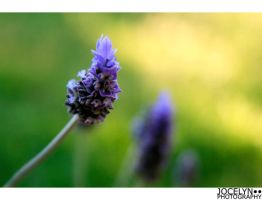 spring is arriving 5 by indie-click