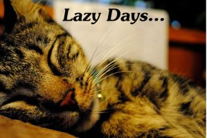 Lazy Days... by acors