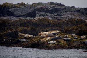 Seals resting on the shore by photogooroo