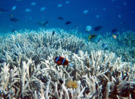 Great Barrier Reef photography by Skylanth