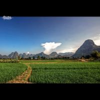 Yangshuo Rice Fields by Blazko