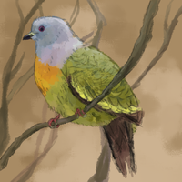 pink-necked green pigeon by haemorrhoid