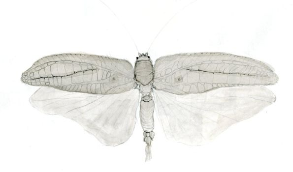 Insect Ink Study Thing by IHEOfficial