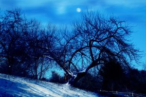 Moonlit  Orchard by tidesend